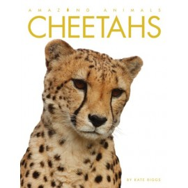 Amazing Animals: Cheetahs